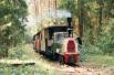 Kolejka w lesie - widok na ciuchcie i wagony